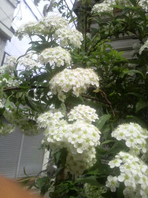 休みダア〜