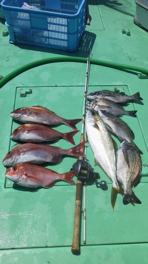 今日は…マダイ釣りです〜