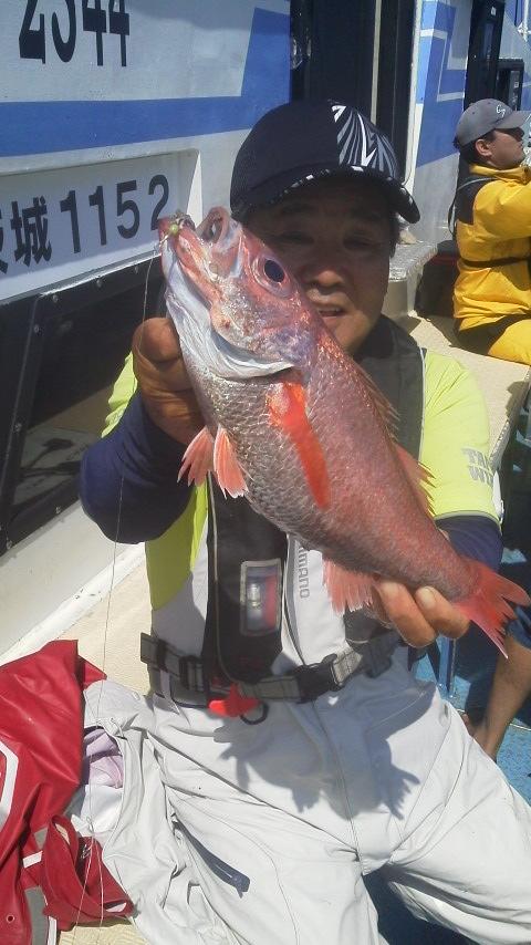 趙高級魚…アカムツさんですよ〜