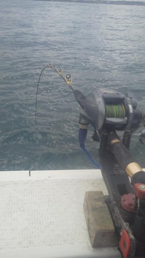 鹿島港釣り大会に……