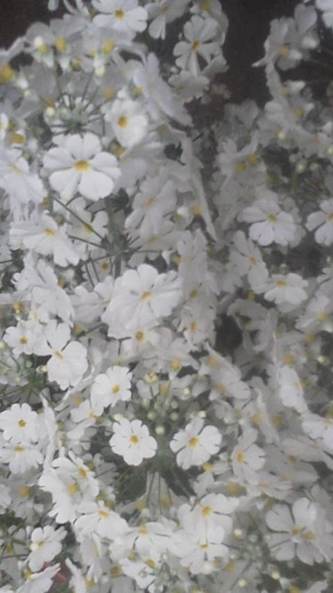 春よこぃ♪早くこぃ♪