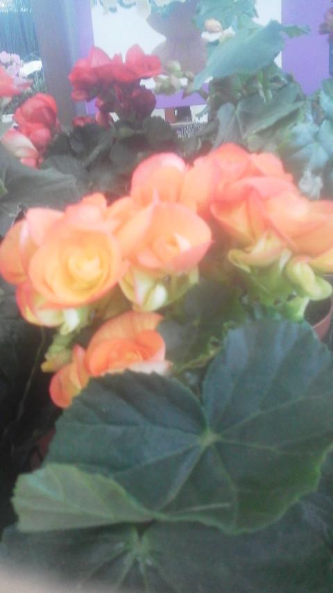 花びらの…